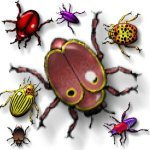 beetle-bug-b2