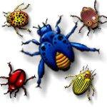 beetle-bug-g7