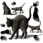 black-cats-hands-feet-a11