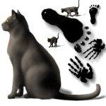black-hands-cats-feet-b2