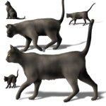 blackcats-c31