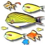 fish-c3
