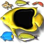 fish-e5