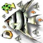 fish-f5