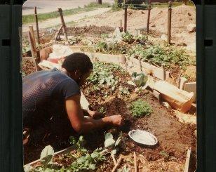 i-veg-me-planting-seattly-mage003