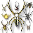 insect-spiders-a1