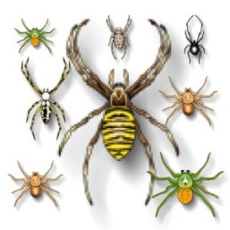 insect-spiders-b2