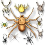 insect-spiders-c3