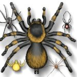 insect-spiders-d4