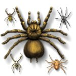 insect-spiders-f6