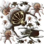 insects-mites-1