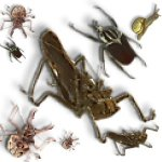 isects-bugs-d4