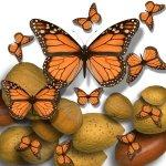 monarks-nuts