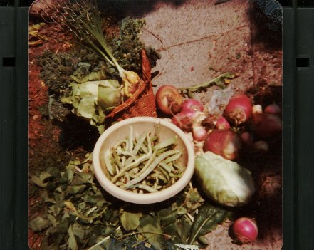 veg-mix-seattle-image001