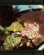 veg-turnip-image053