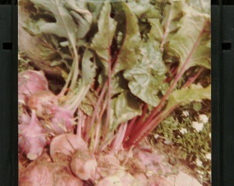 vegbeetsgreens-image029