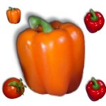 veggies-peppers-sweet-b21