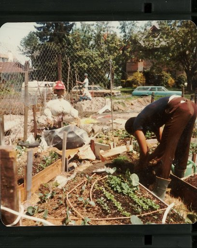 vegmeplanting-image027